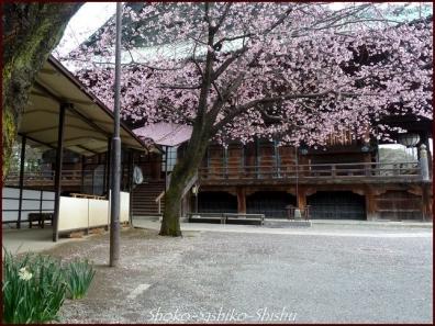 20200416 本堂から 6  護国寺