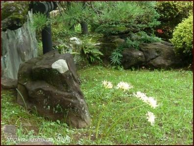 20201003 細川庭園 7  初秋