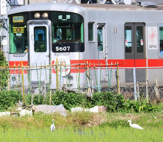 200705hm10.jpg