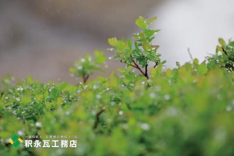 富山県 第5次とやまのライチョウサポート隊 立山室堂