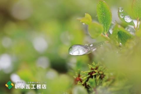 富山県 第5次とやまのライチョウサポート隊 立山室堂雨