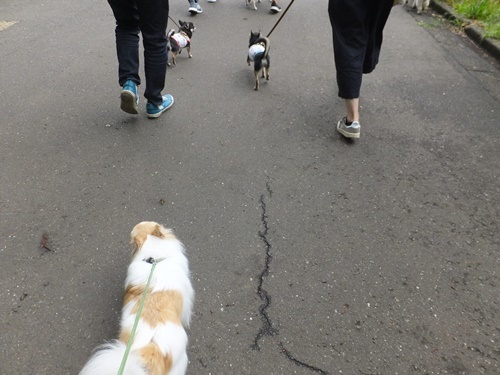 6月駒沢1