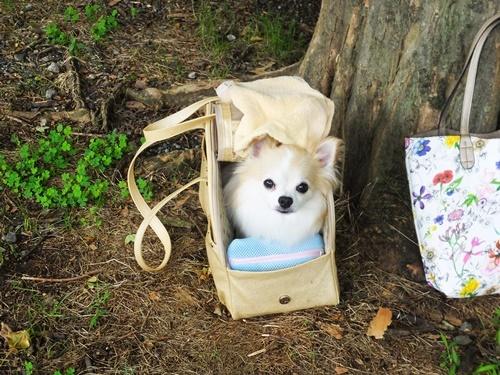6月駒沢3