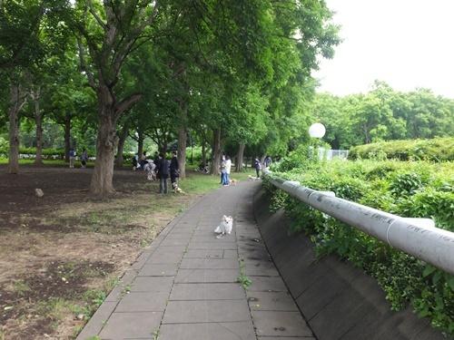 6月駒沢5