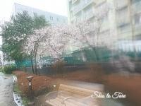DSC_0065_20200322_タイよりLINE