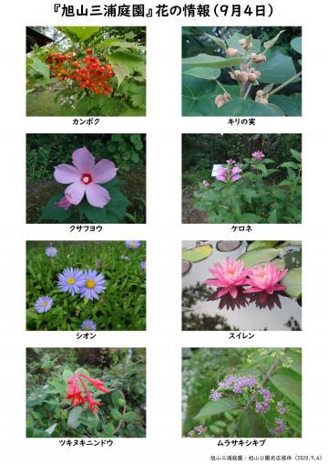 asahiyama_flower_2020_09_04_vol2_ブログ用_convert_20200908140927