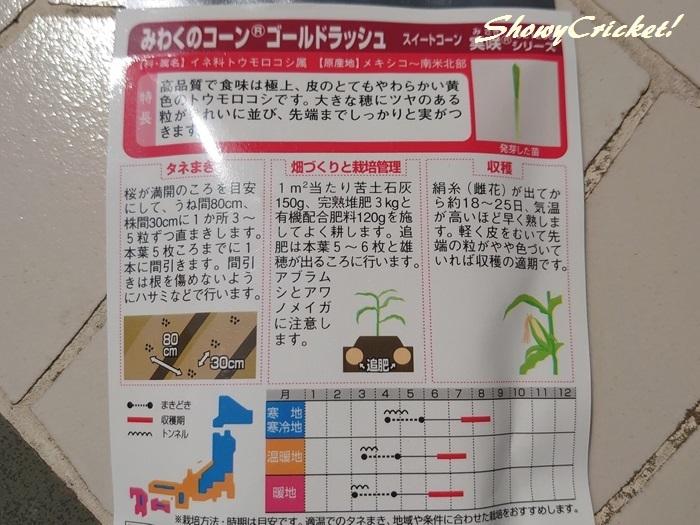 2020-04-03トウモロコシ (3)