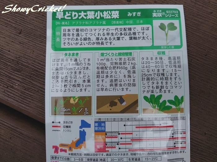 2020-04-26小松菜 (2)