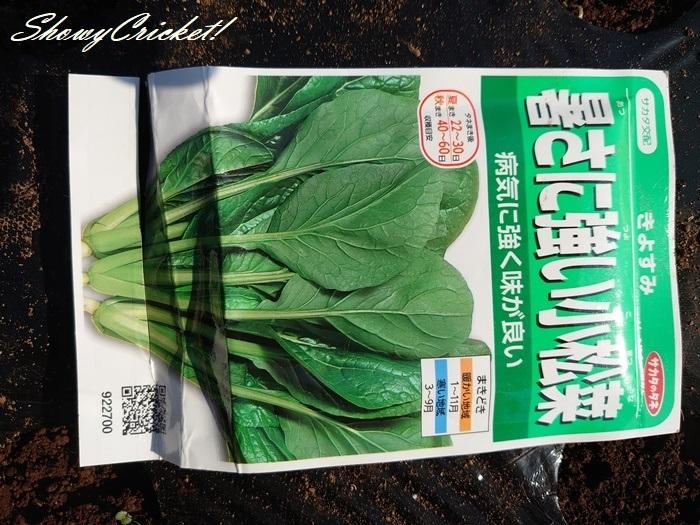 2020-05-30小松菜 (4)