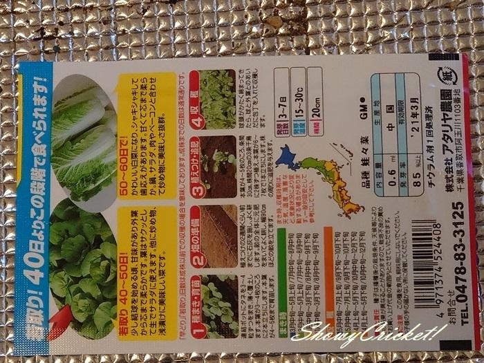2020-08-19白菜 (2)
