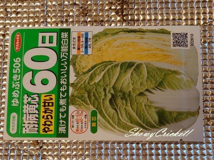 2020-08-19白菜 (5)