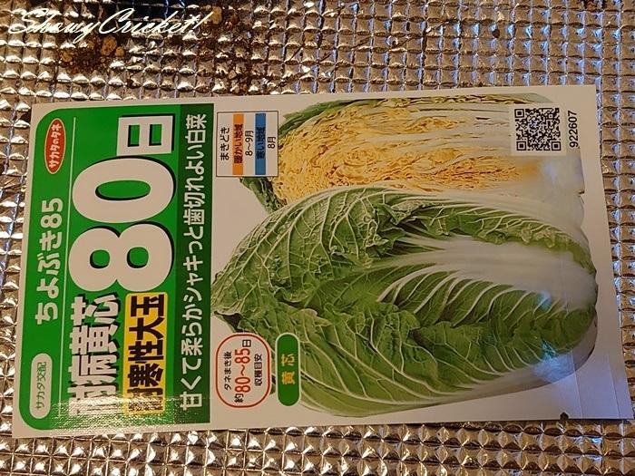 2020-08-19白菜 (8)