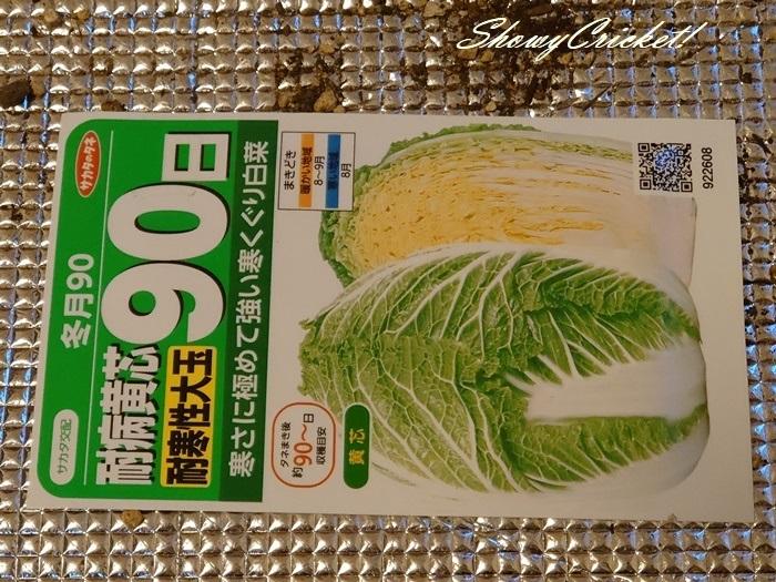 2020-08-19白菜 (11)