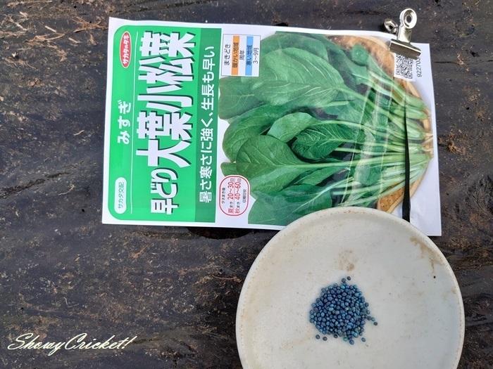 2020-08-22小松菜 (2)