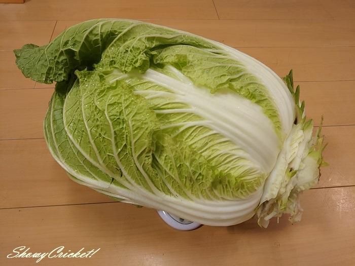 2020-11-27白菜 (18)
