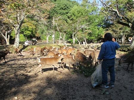 大元公園10-25