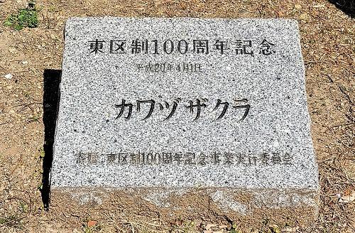 カワヅザクラ碑