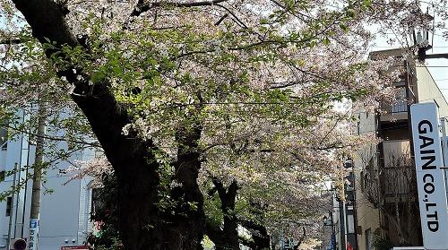 一部は葉桜