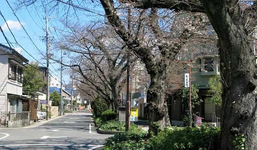 水道みち緑道 桜並木