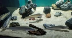 川崎水族館のお友達