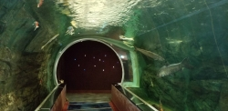 水族館名物、トンネル
