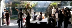 三密状態の京都水族館