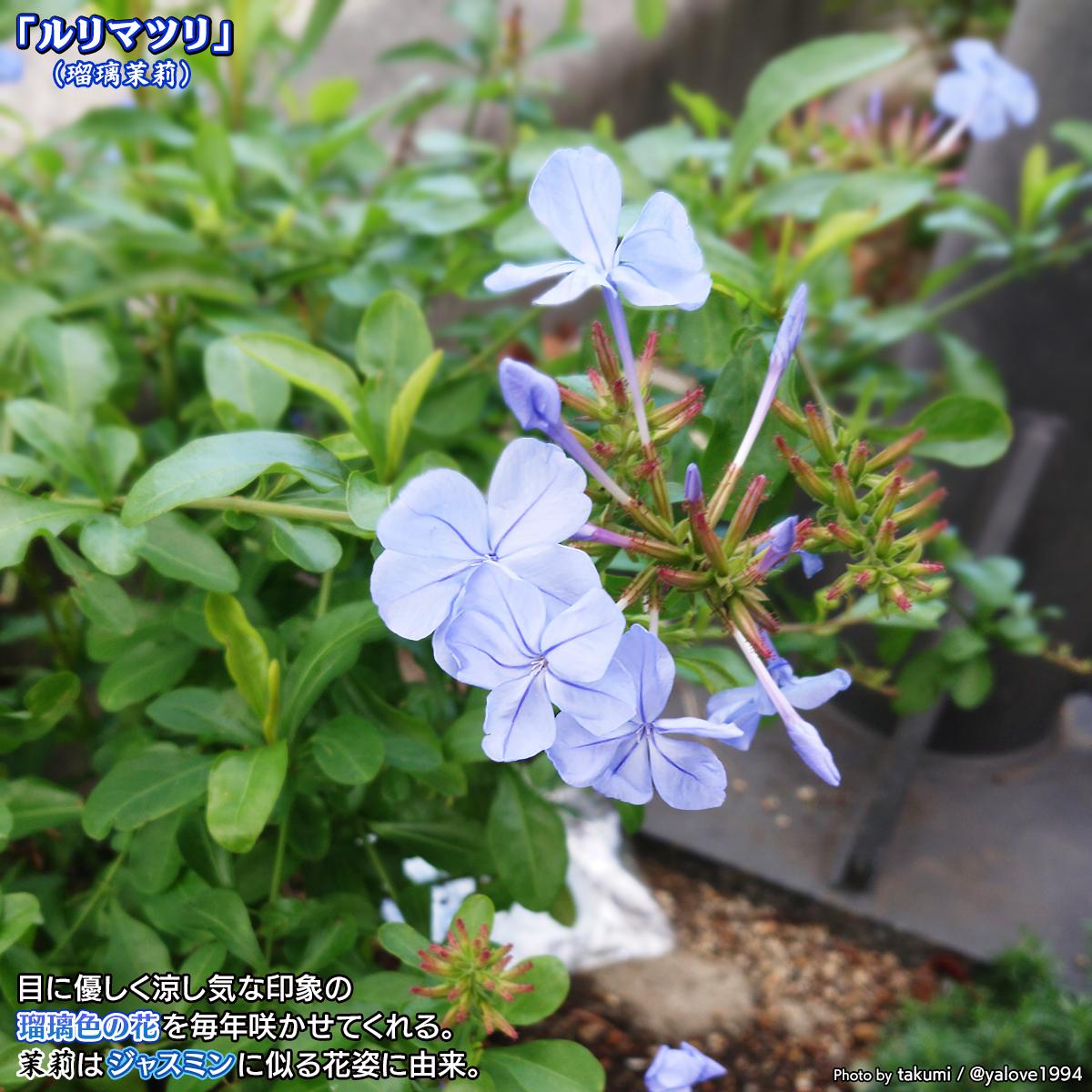 DSC_0003_BURST20201109132253128.jpg