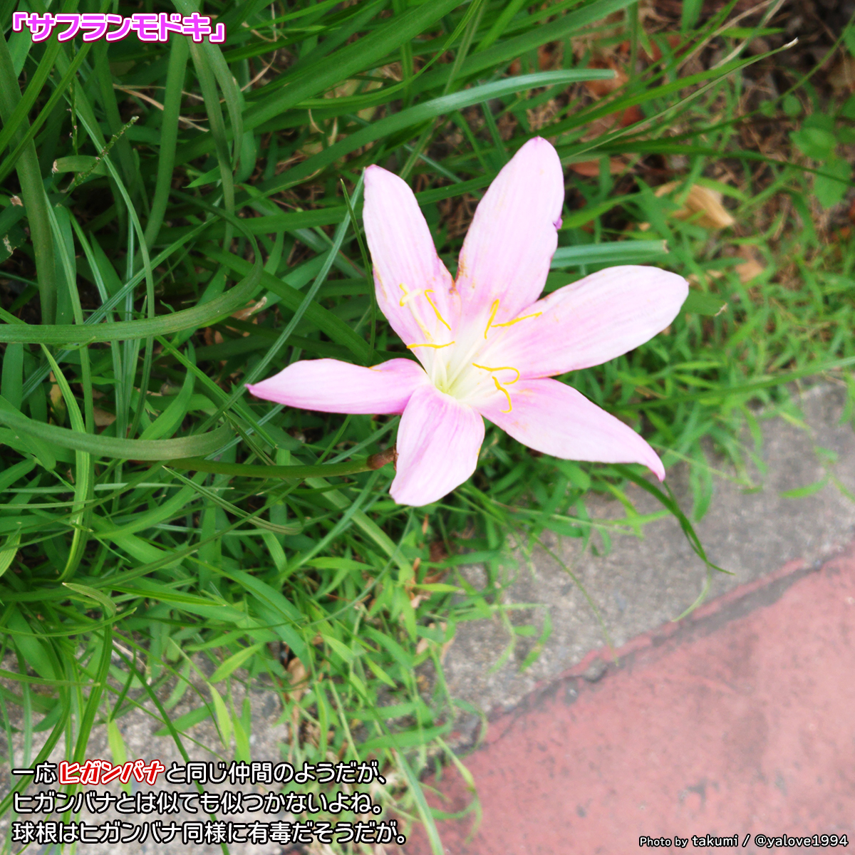DSC_0005_BURST20200914150324309.jpg