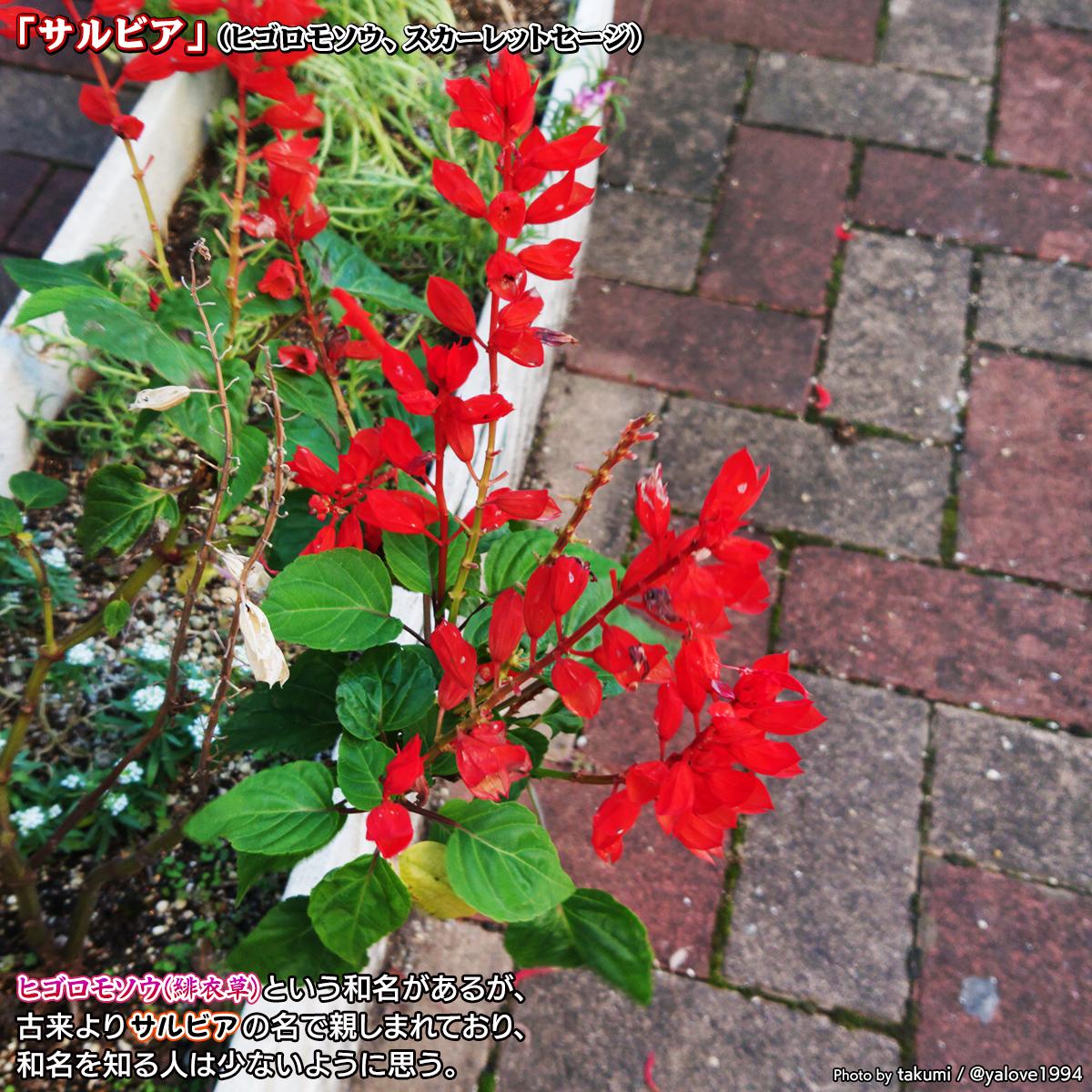 DSC_0006_BURST20201104b.jpg