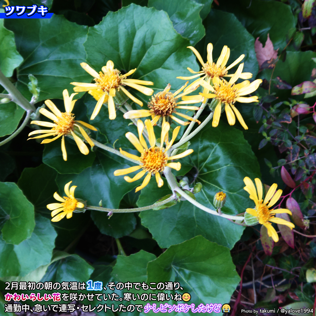 DSC_0023b.jpg