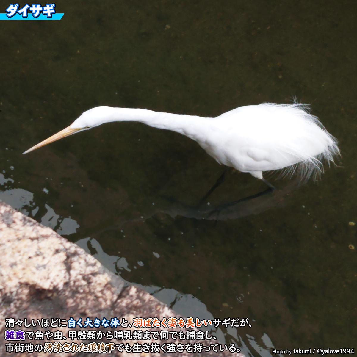 DSC_0025a.jpg