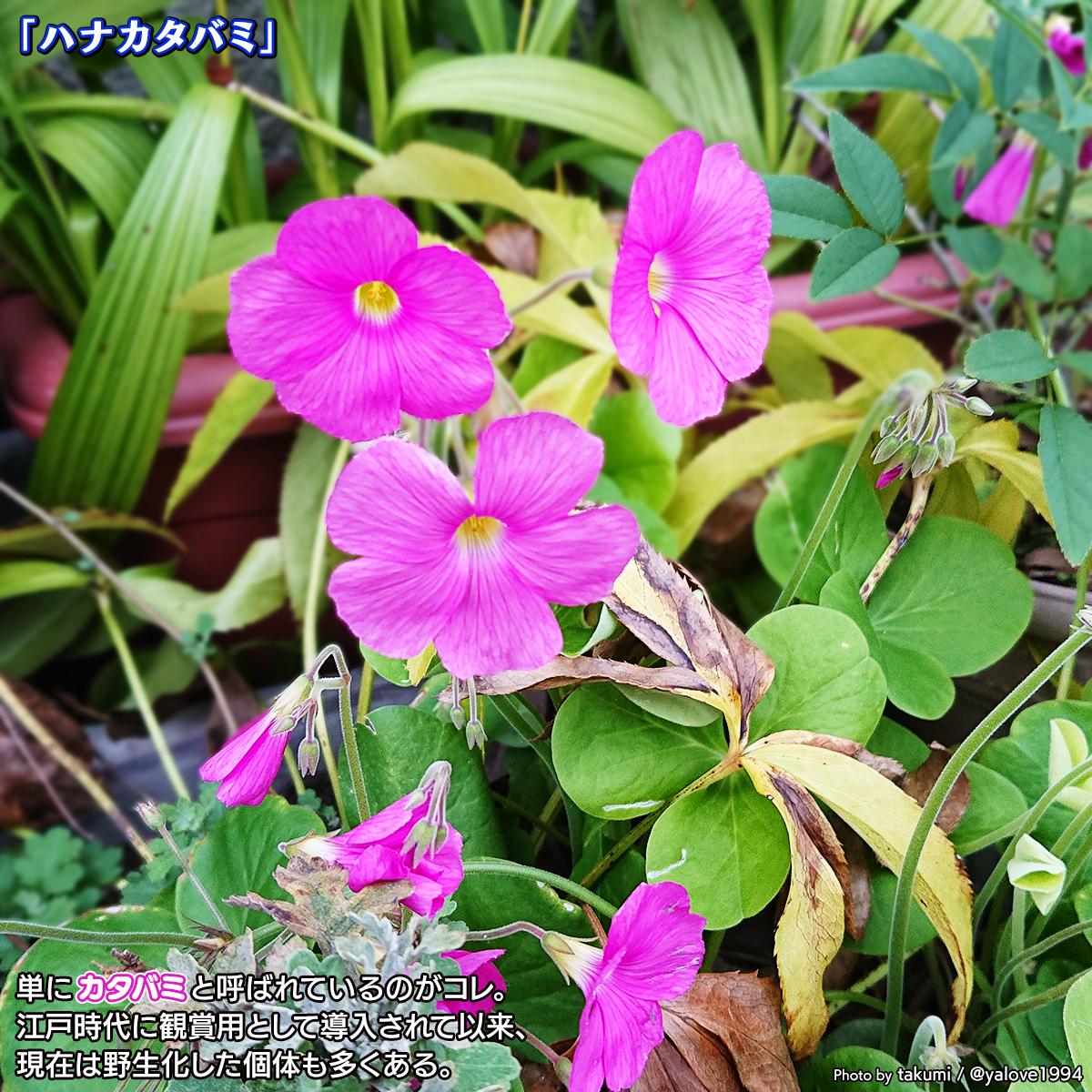 DSC_0385_20201008124644266.jpg