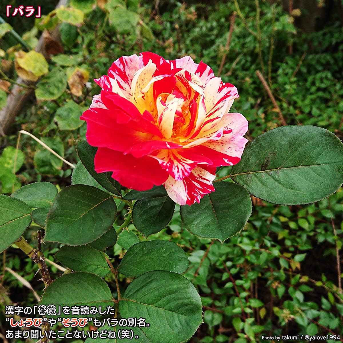 DSC_0394_2020102112435350c.jpg