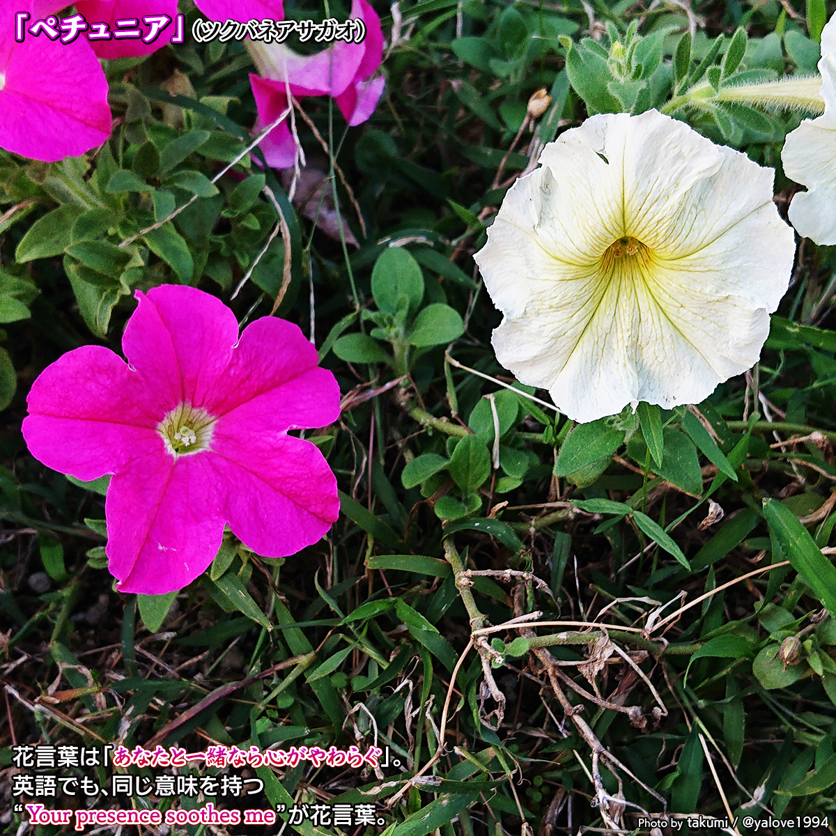 DSC_0442_2020102417440418e.jpg