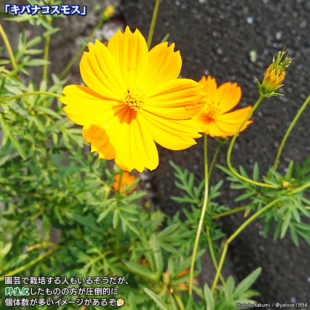 DSC_0449_202010261034500fe.jpg