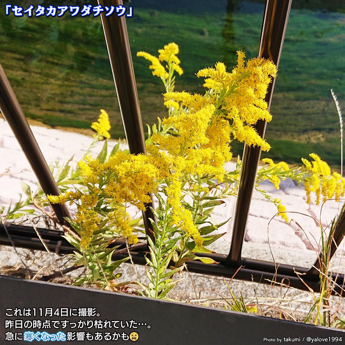 DSC_0683_20201112124314df6.jpg
