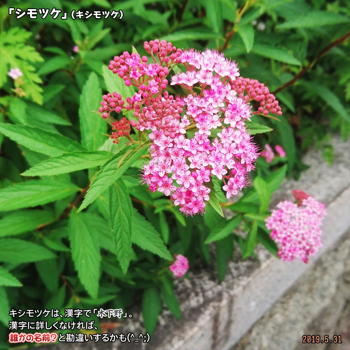 DSC_0696_20200505173636672.jpg