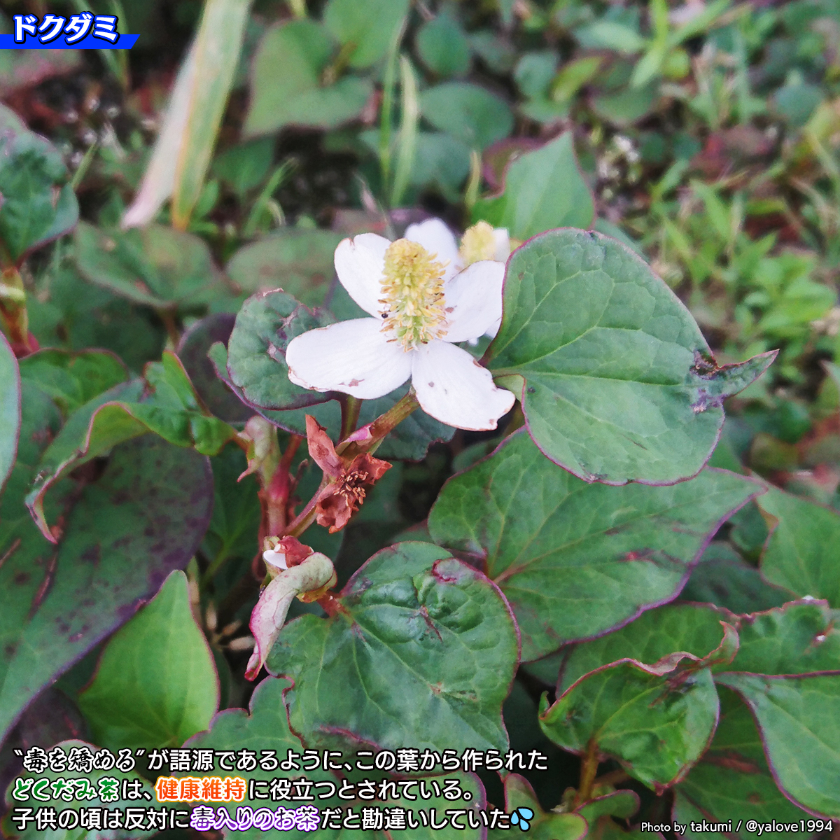DSC_0699.jpg