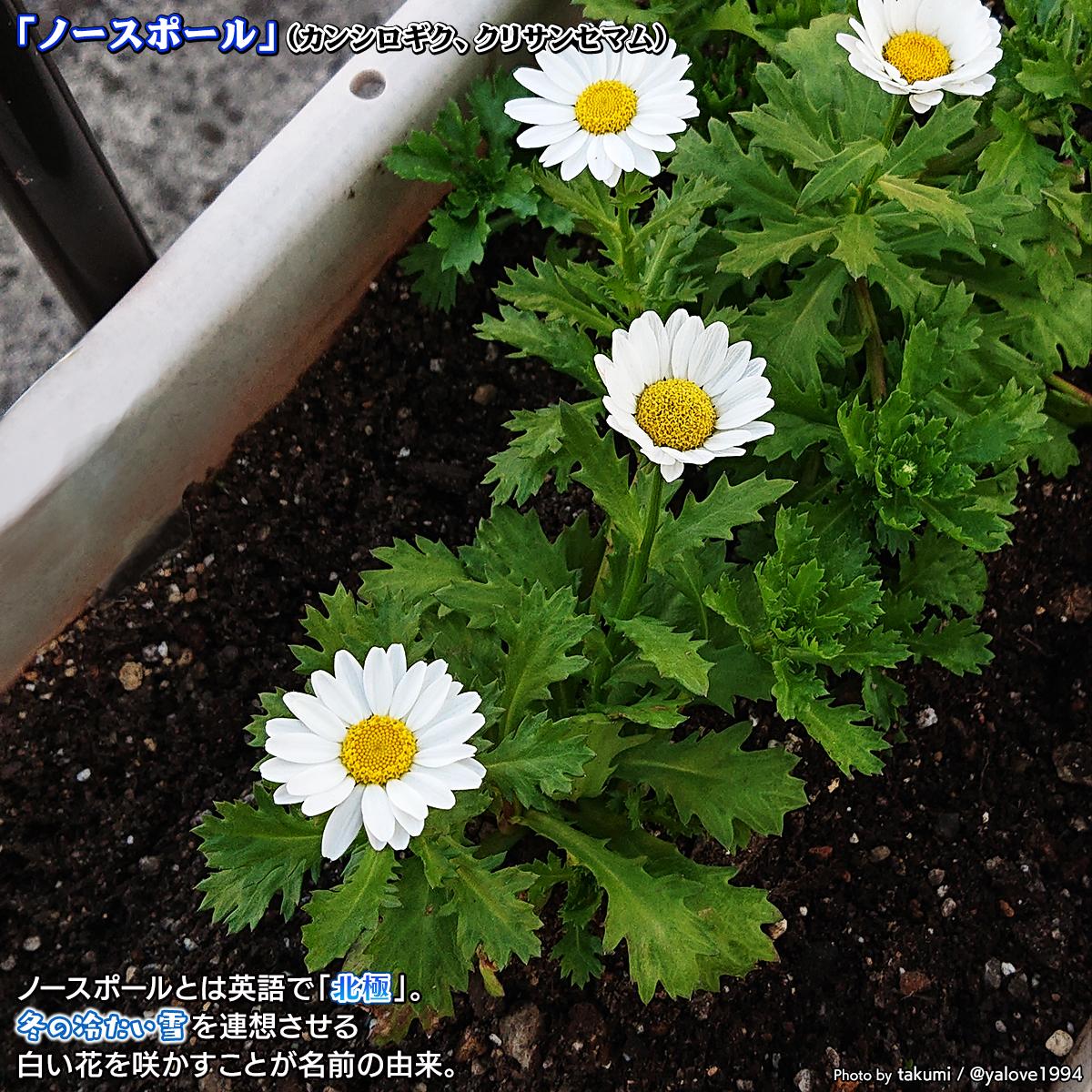 DSC_0703_20201030103526a5a.jpg