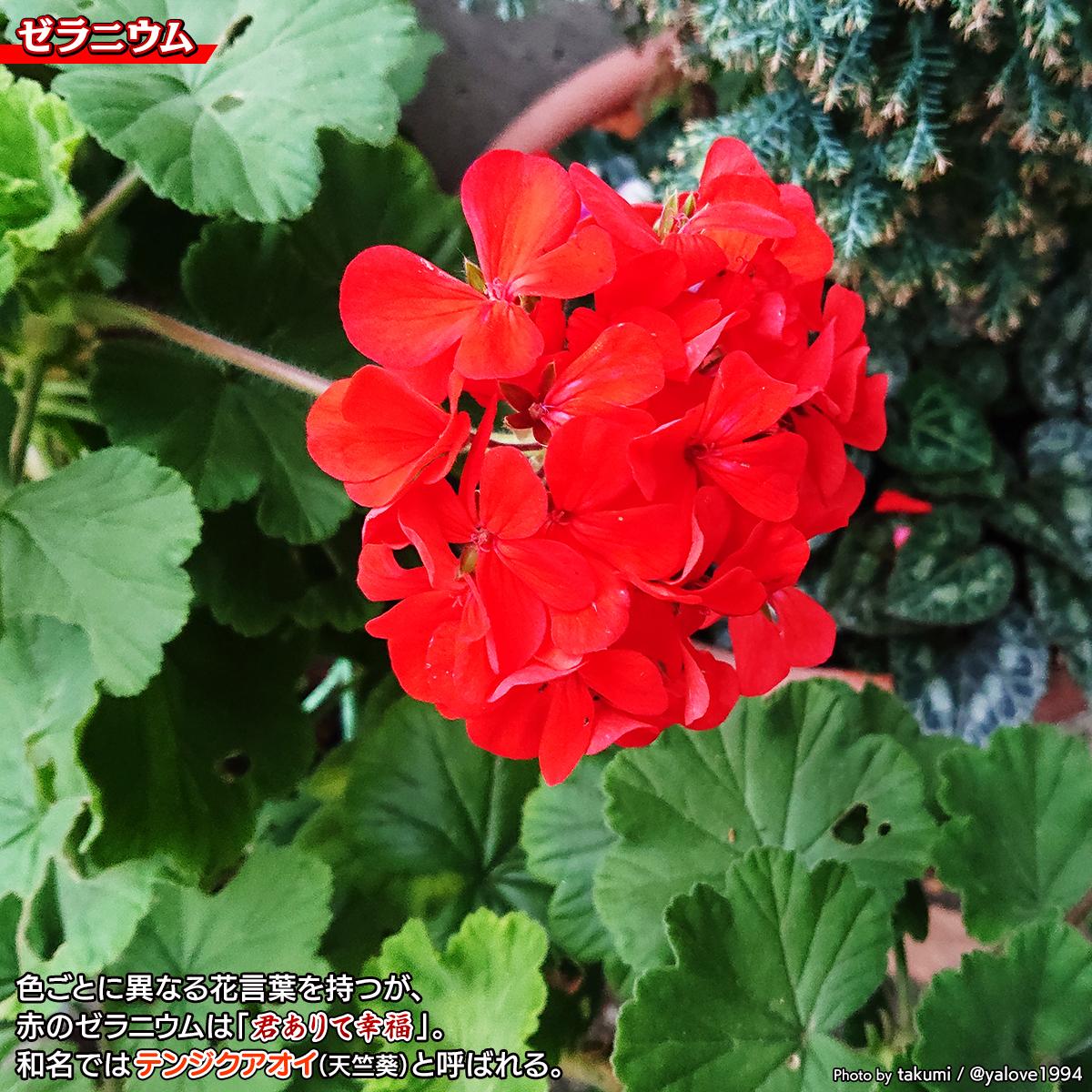 DSC_2061_202101242209246d9.jpg