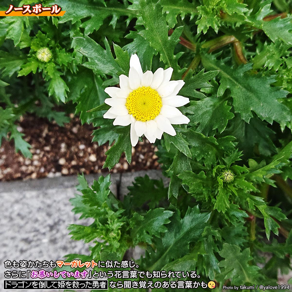 DSC_3073a.jpg