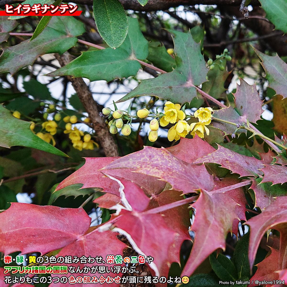 DSC_3230.jpg