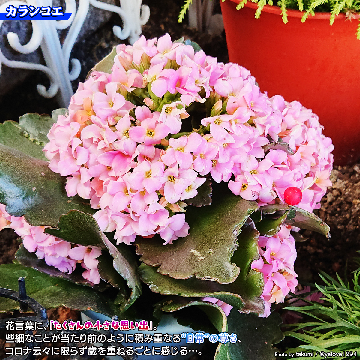 DSC_3240.jpg