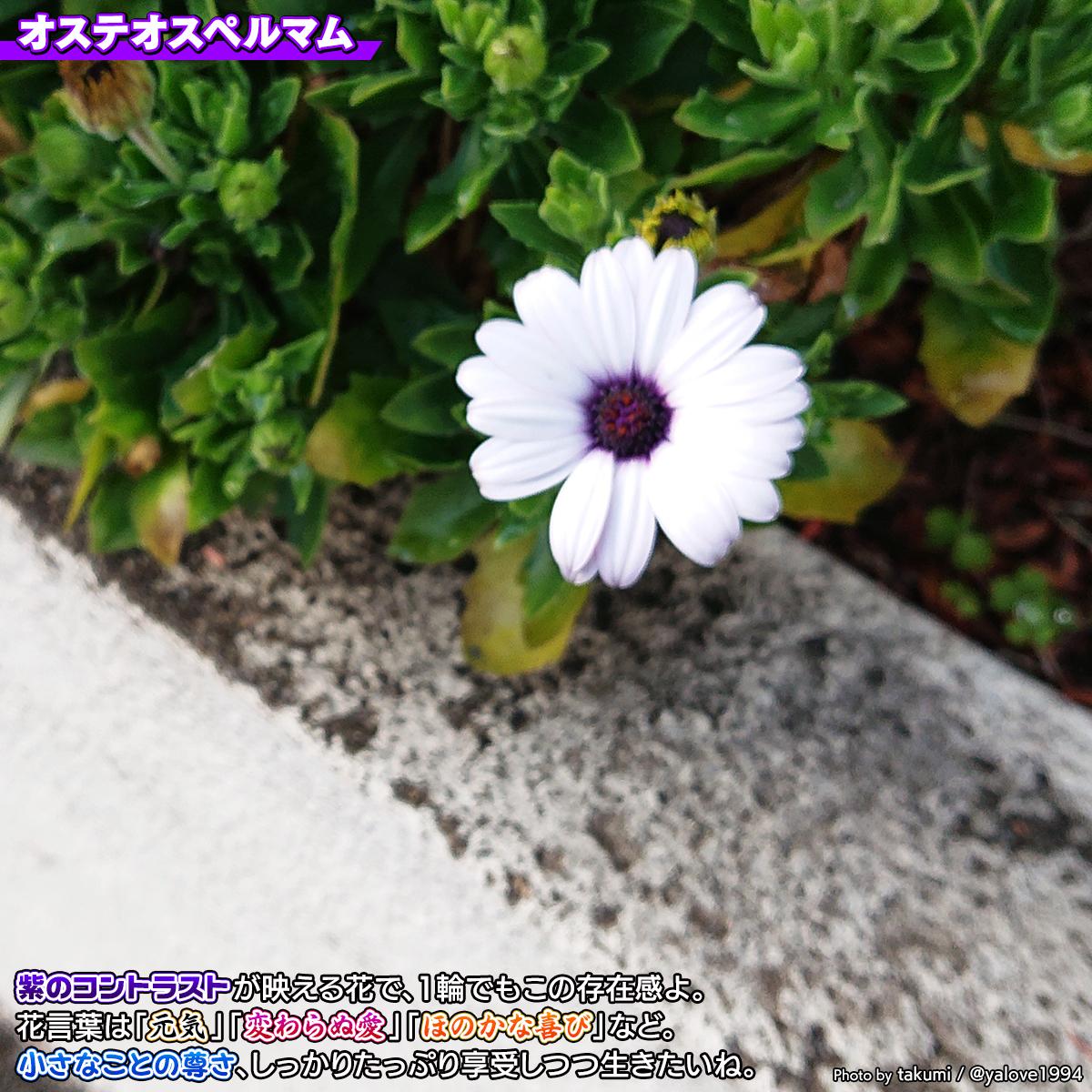 DSC_3387a.jpg