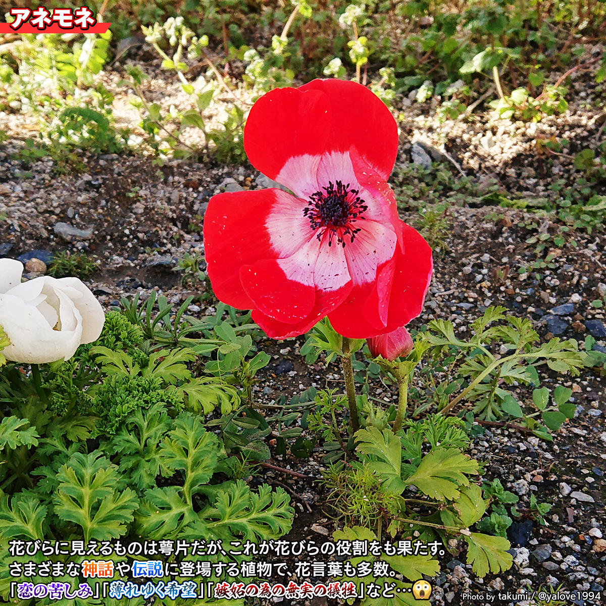DSC_3431a.jpg