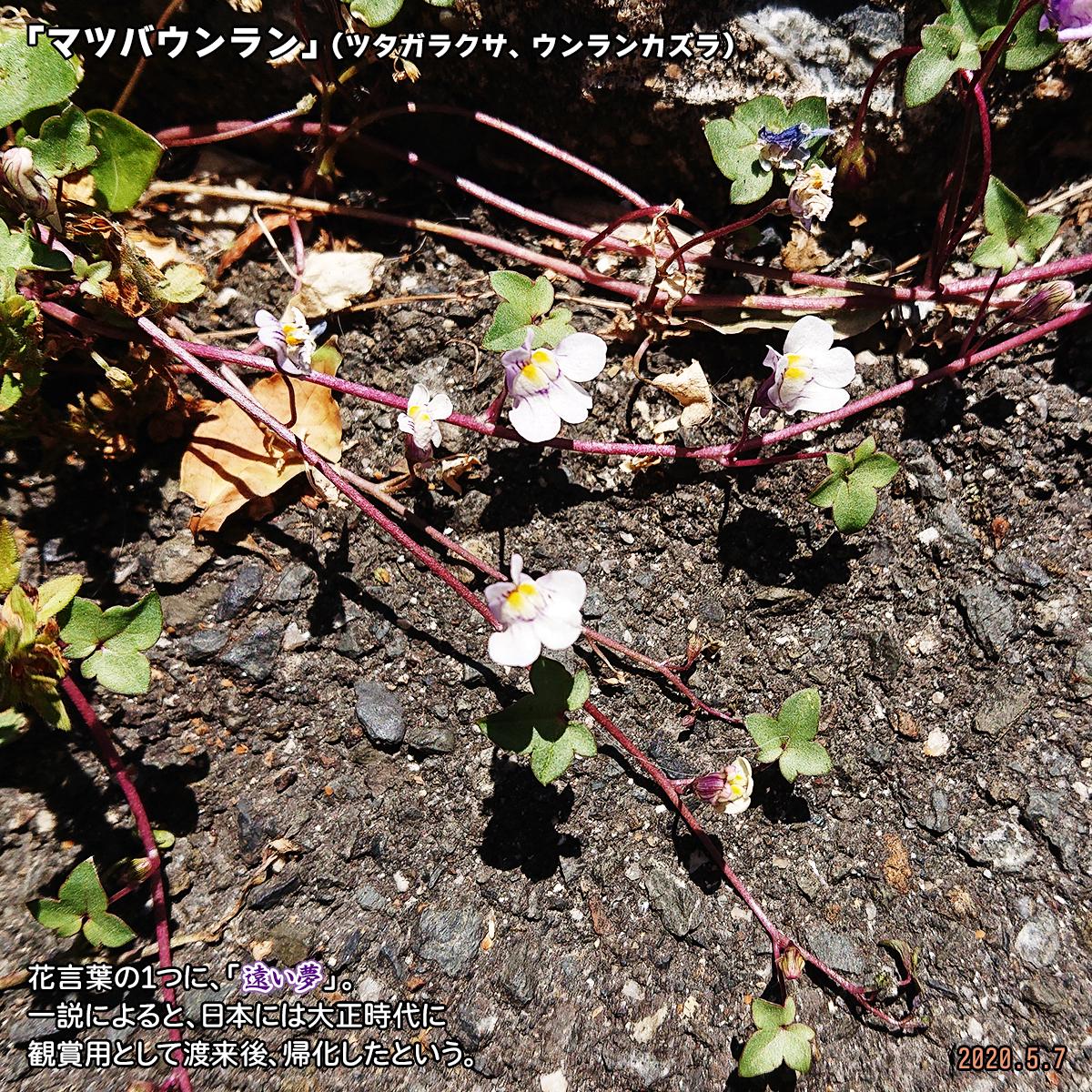 DSC_3495.jpg