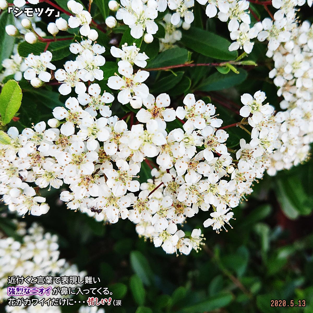 DSC_3565_20200517161004dc9.jpg