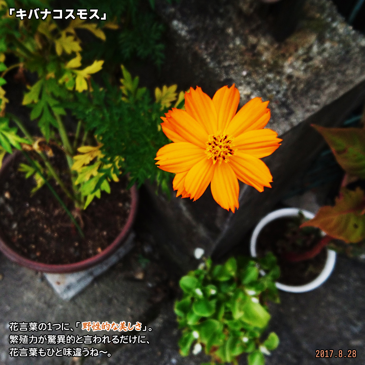 DSC_3662_202003122111422e2.jpg