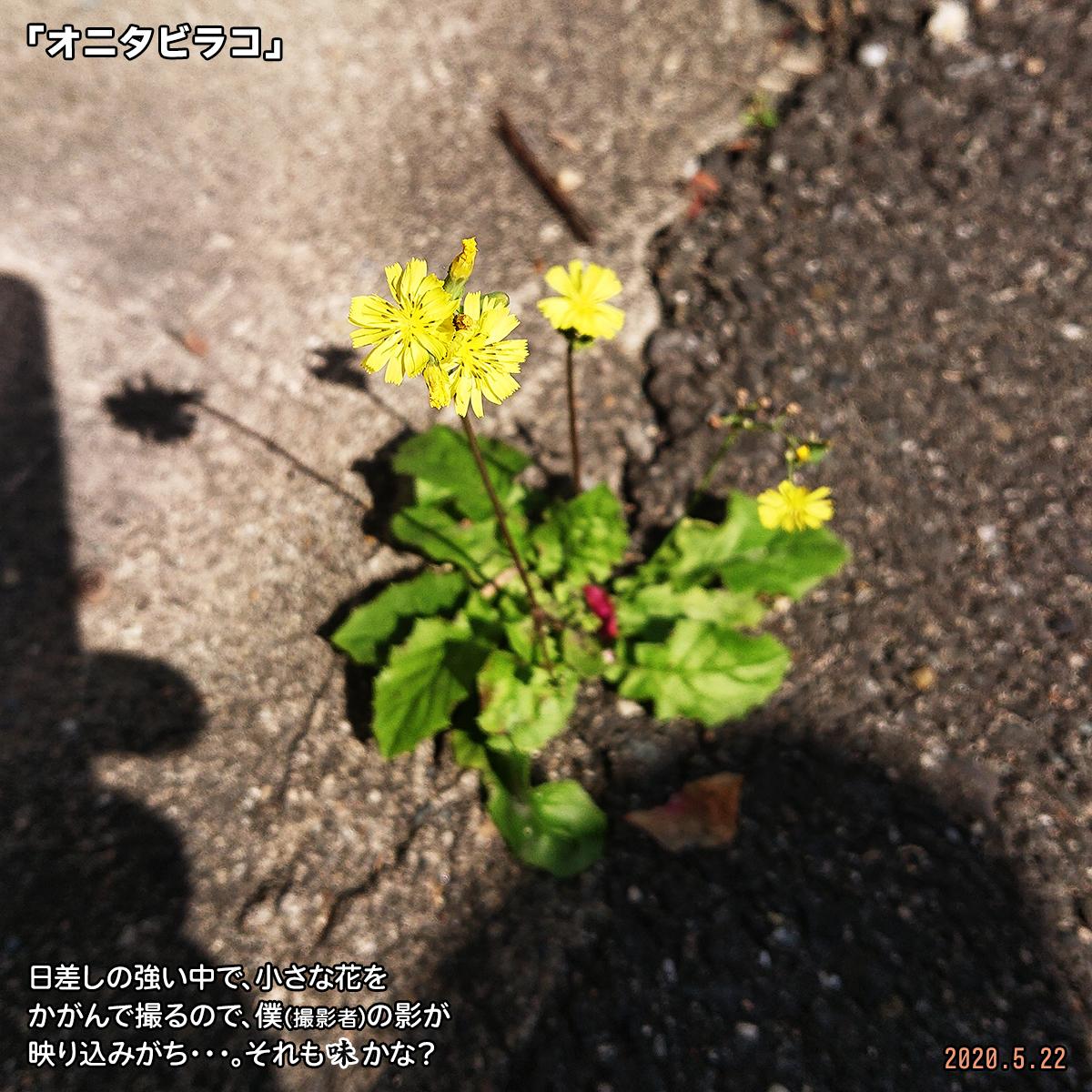 DSC_3853.jpg