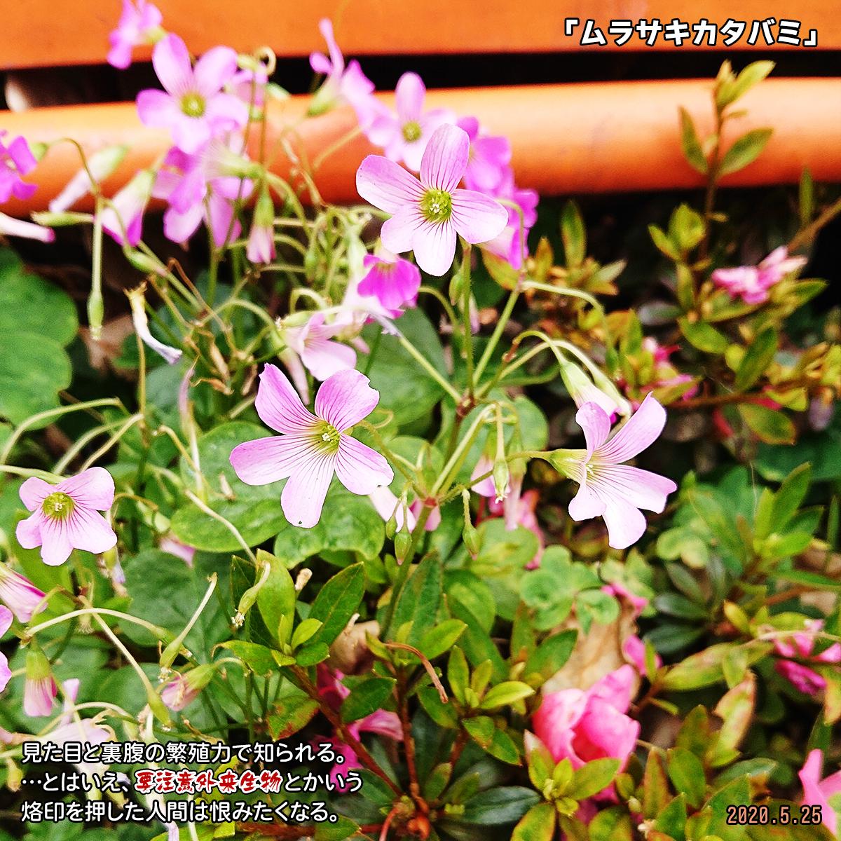DSC_3898.jpg